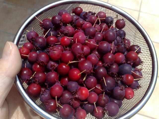 june-berry-jam-1