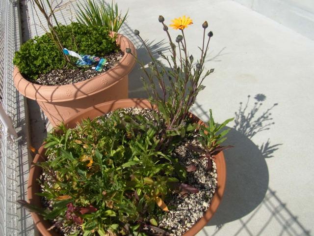 garden-flower2