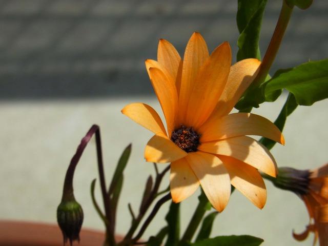 garden-flower3