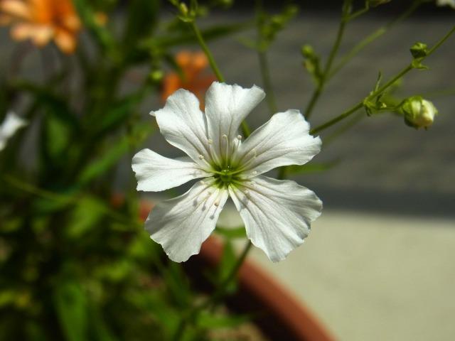 garden-flower4
