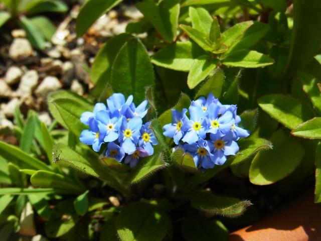 garden-flower5