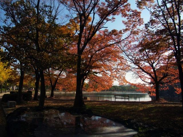 大阪城公園内を散歩