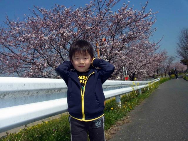 ぽこすけと桜