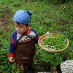 春の野草 採取~調理 野外で楽しむ