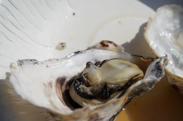 こんな牡蠣が一皿に二つ