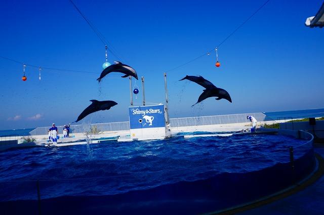 dolphin-show1