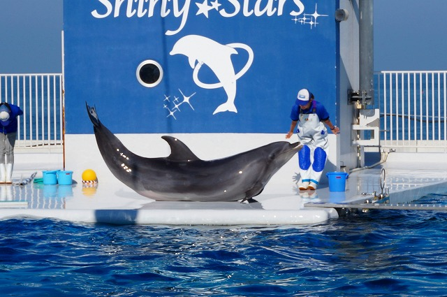 dolphin-show2