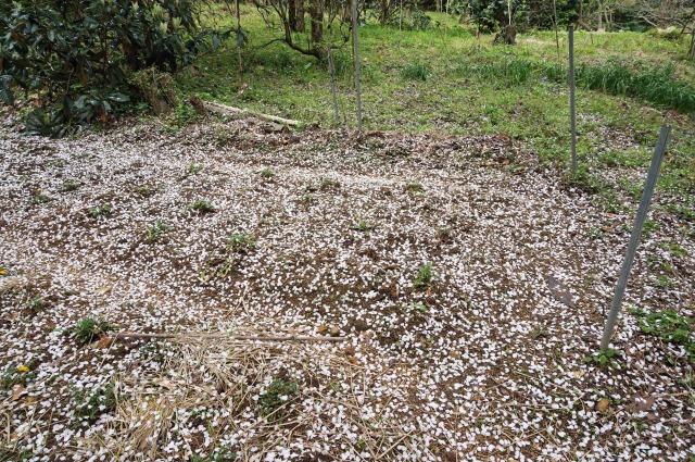 petals-carpet